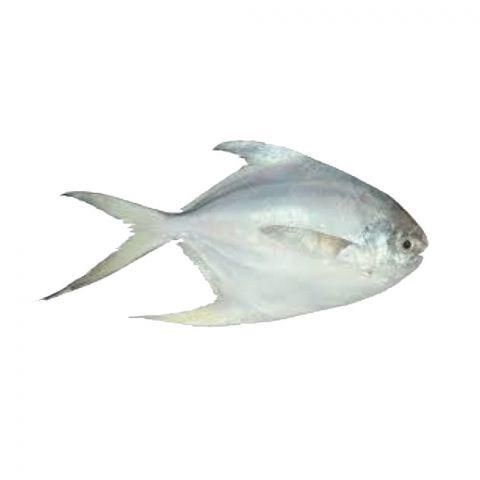 Safaid Paplet Fish (White Pomfret), 1 KG (Gross Weight)