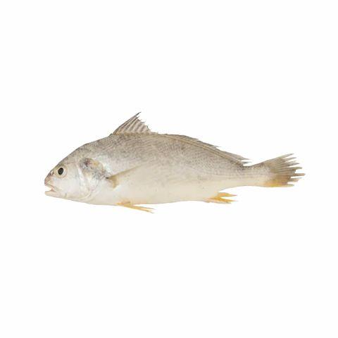 Mushka Fish (Silver Croaker), 1 KG (Gross Weight)