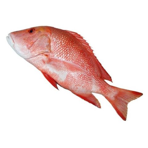 Heera Fish (Red Snapper) 1 KG (Gross Weight)