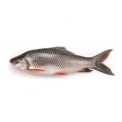Rahu Fish, 1 KG (Gross Weight)